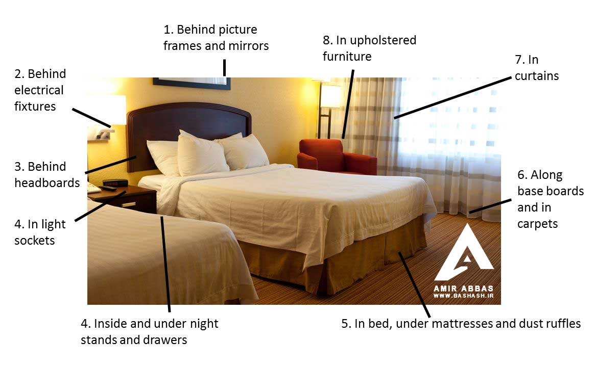 Inspect Hotel Room For Bed Bugs